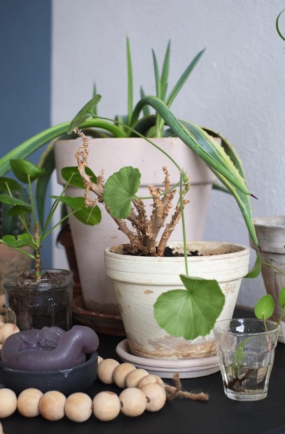 Pimpelwit Interieurontwerp-industriele tafel-planten-denim drift- flexa