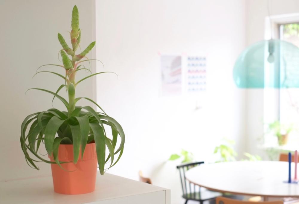 5-x-groen-in-huis-interieurstyling-interieurstylist-interieuradvies-kartell
