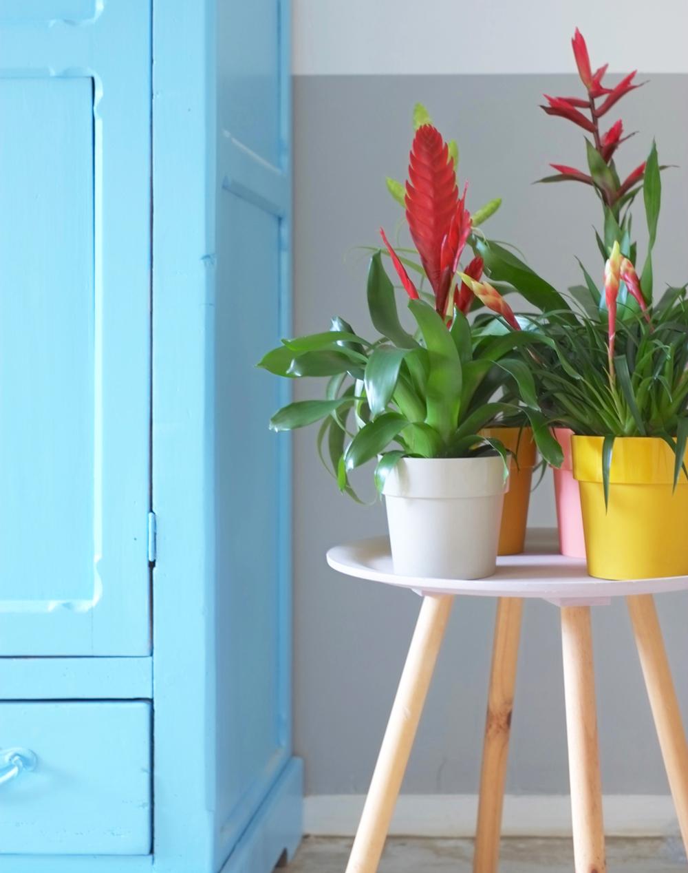 5-x-groen-in-huis-interieurstyling-interieurstylist-interieuradvies